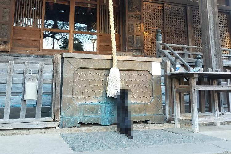 「神様、お願いしますニャ」神社へ初詣に来ていた珍しい参拝客の姿がTwitterで話題に!