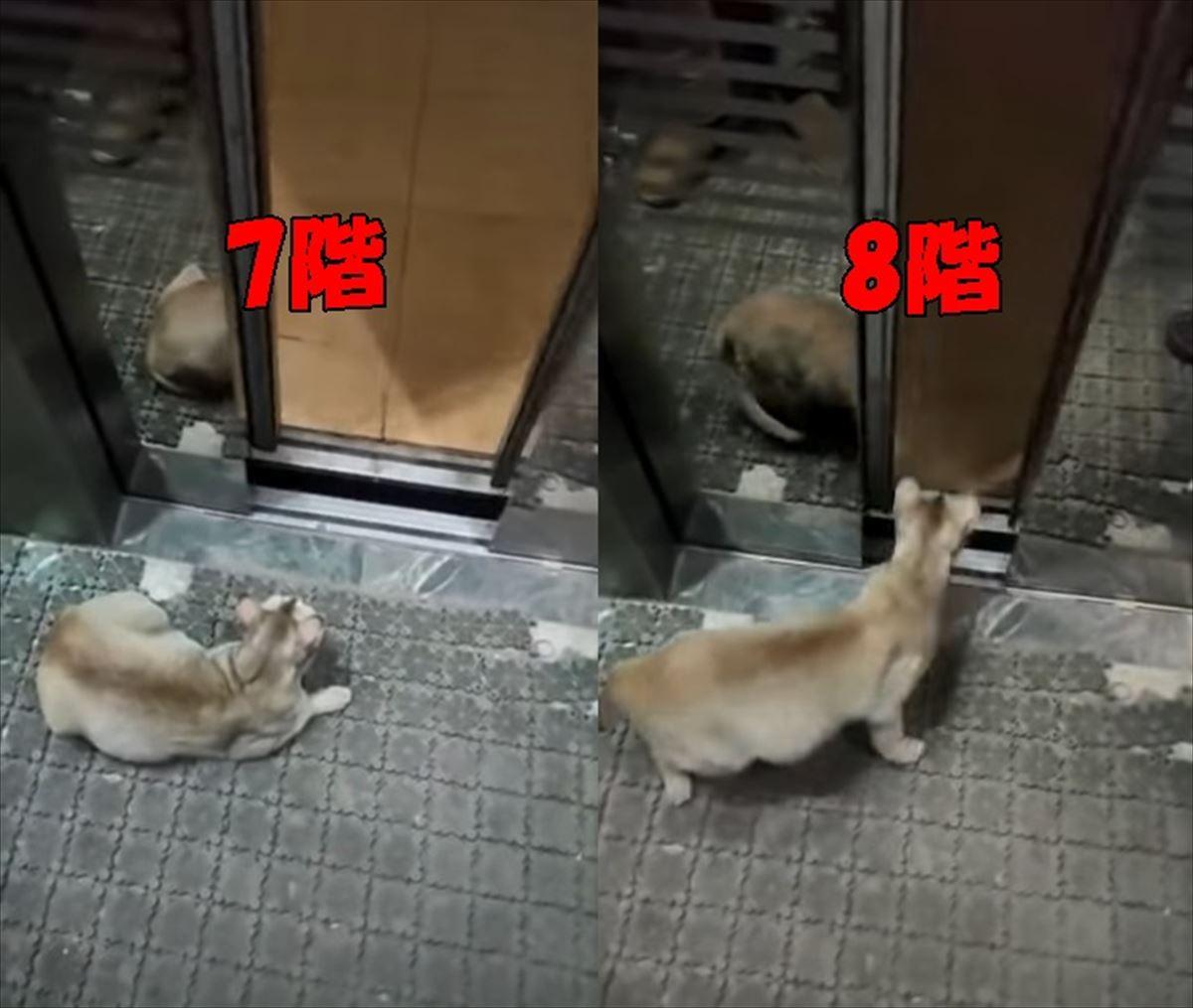 自分の住んでいる階数を把握している賢い猫ちゃんが凄い!
