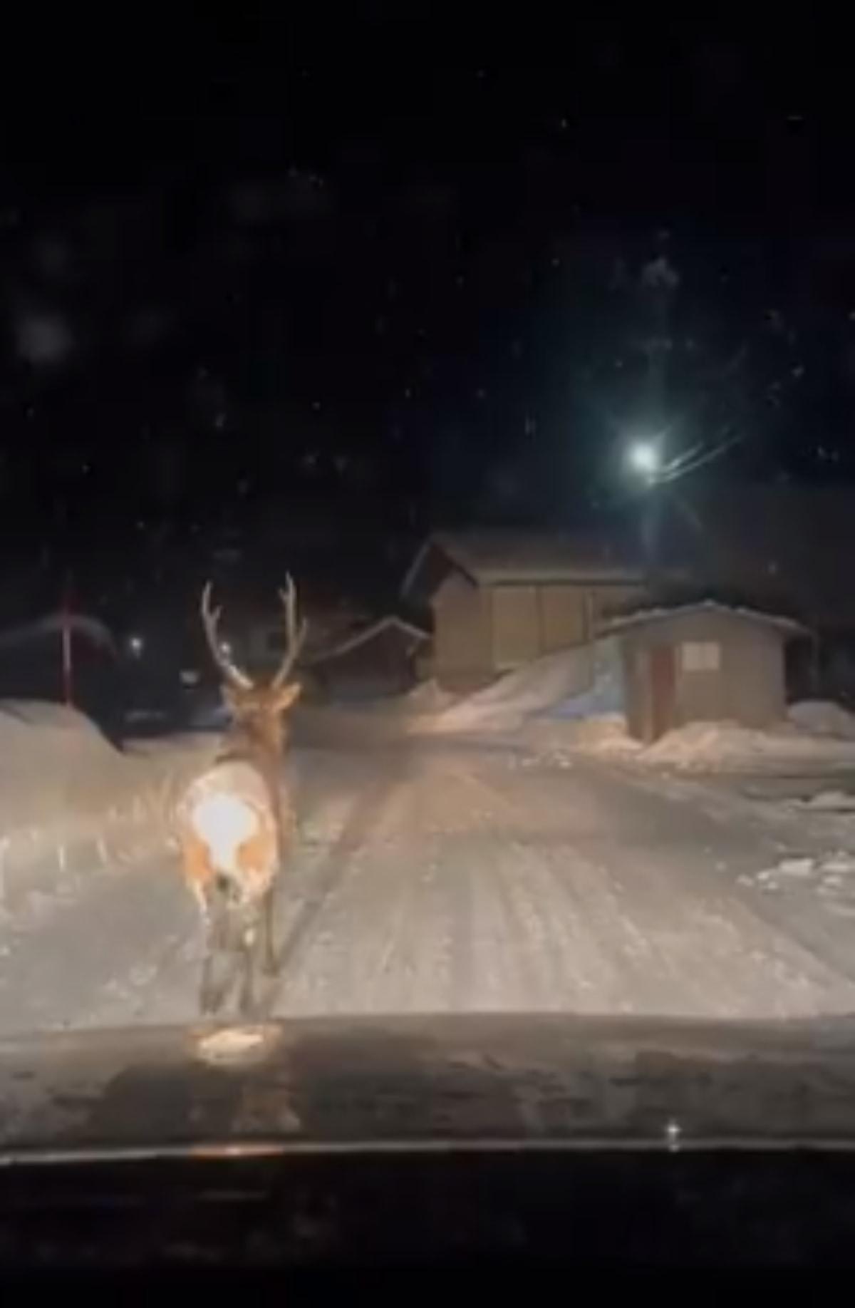 まるで童話の世界!雪の夜にドラレコが捉えた先導者とは?