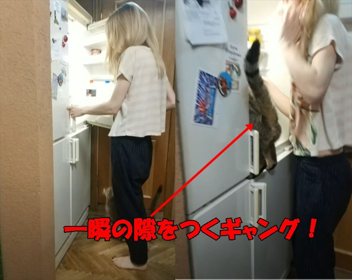 冷蔵庫を開けた一瞬の隙をつく小さなギャングの犯行に驚愕!ヤツが盗んだものとは・・・