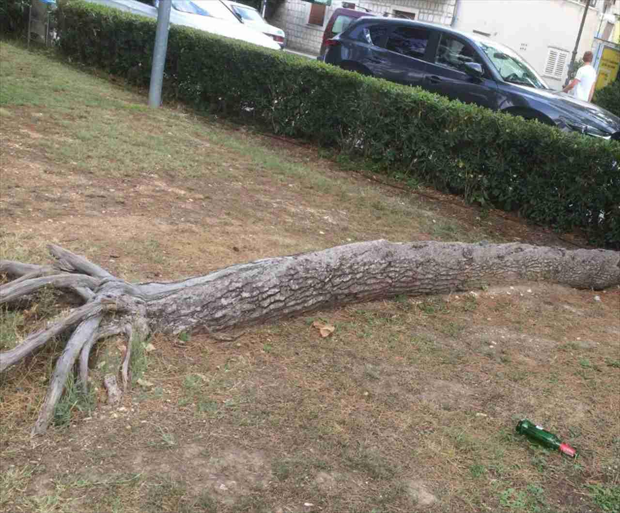 完全に倒れたはずの木が凄いことに!木の生命力を思い知らされる信じがたい光景が話題に!