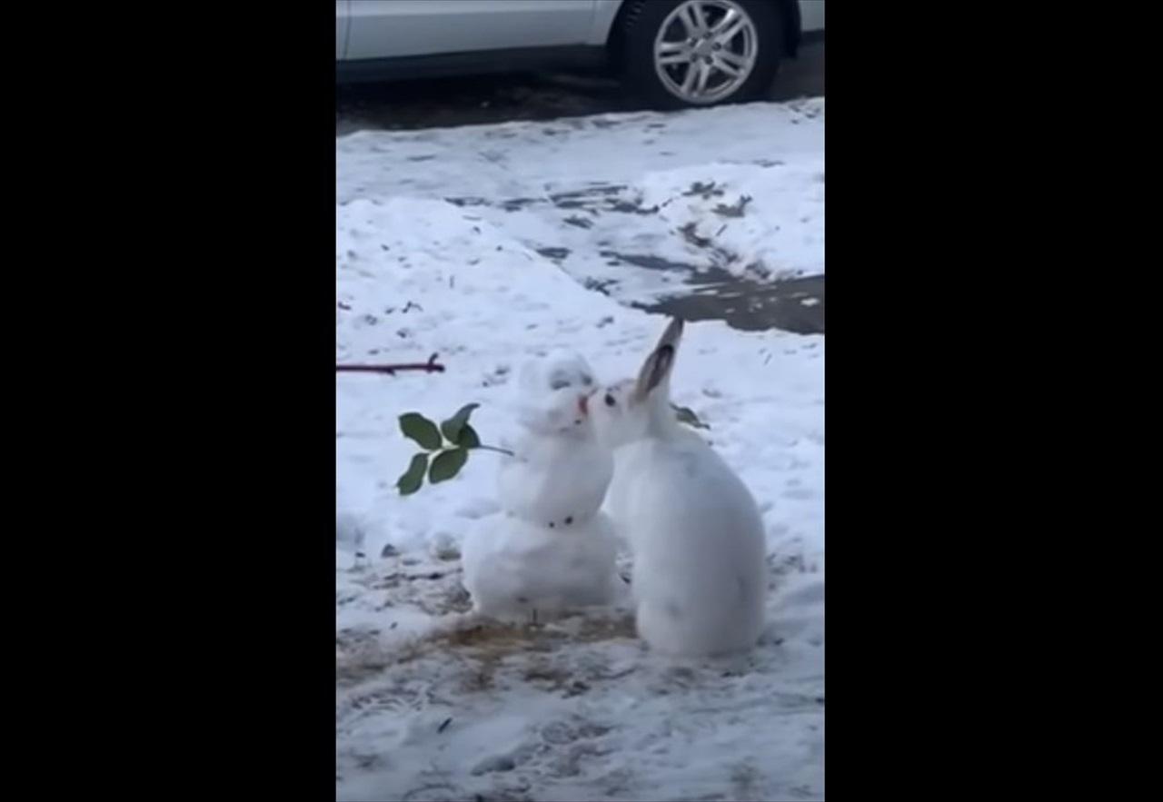 ウサギが雪だるまにキス?なんてメルヘンチックな世界・・・と思いきや、そうではなかった(笑)