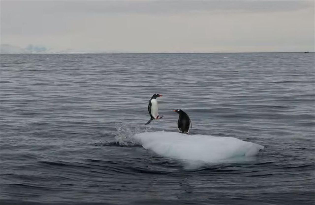 物語のワンシーンのよう・・・南極の小さな氷山の上でペンギン同士の戦いが繰り広げられていた!