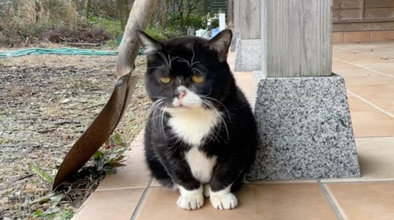 全ての動きが他の猫の1/3のスピード!のんびりニャンコ「もんた」が可愛すぎる