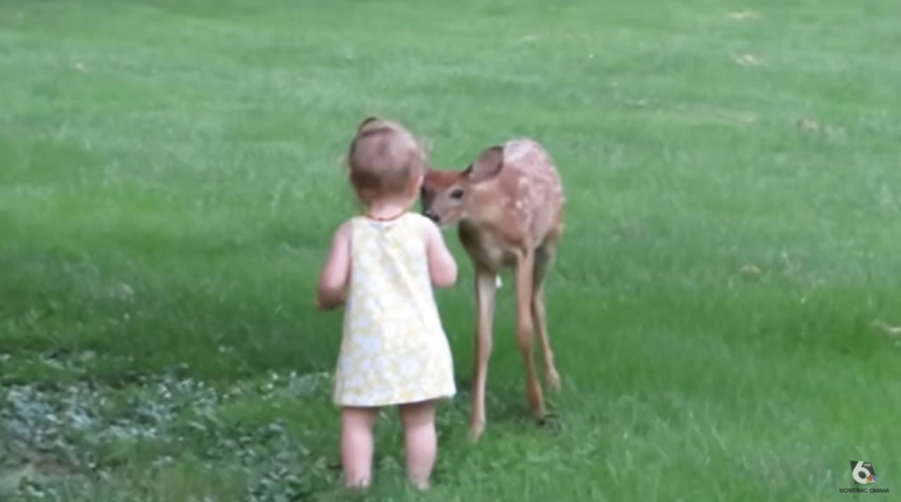 リアルディズニーの世界?赤ちゃんと小鹿の素敵な世界に癒される♪