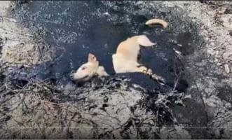 助かってよかった!廃棄されたアスファルト補修ゴムに埋まってしまった犬を救出