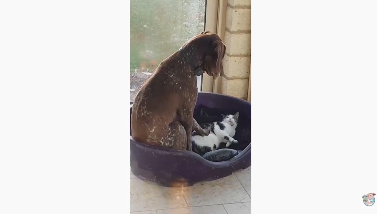 ねぇねぇそこ僕の場所なんだけど・・・犬と猫の関係性が面白い動画♪