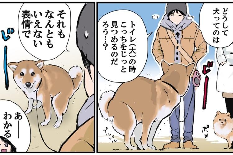 そうだったんだ!ワンコがうんちの時に飼い主を見ている理由を描いた漫画になるほど
