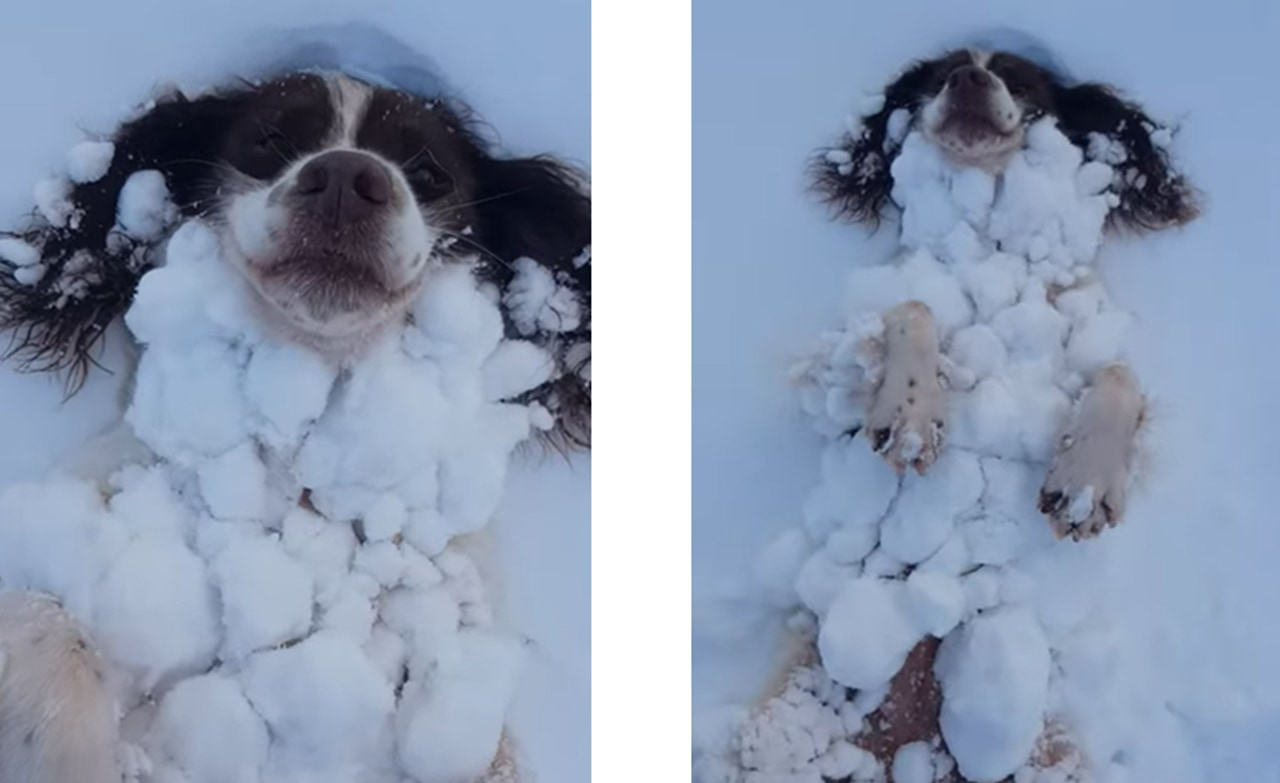 寒くないの!?雪が好きすぎて雪と一体化するワンコが可愛すぎる