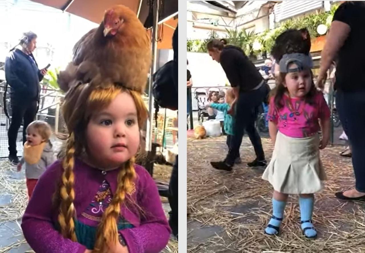 なんでそうなった!?ニワトリを頭に乗せるのが好きな女の子が可愛い!