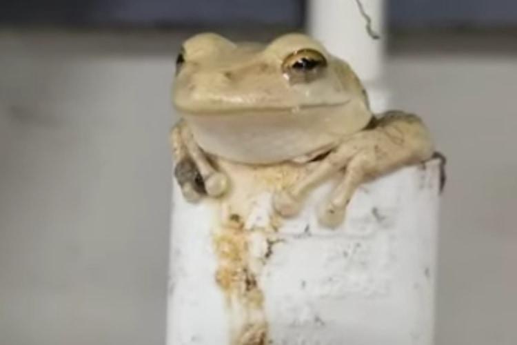 「良い場所み~っけ♪」暑い日にくつろげるベストポジションを見つけたカエルがかわいい!