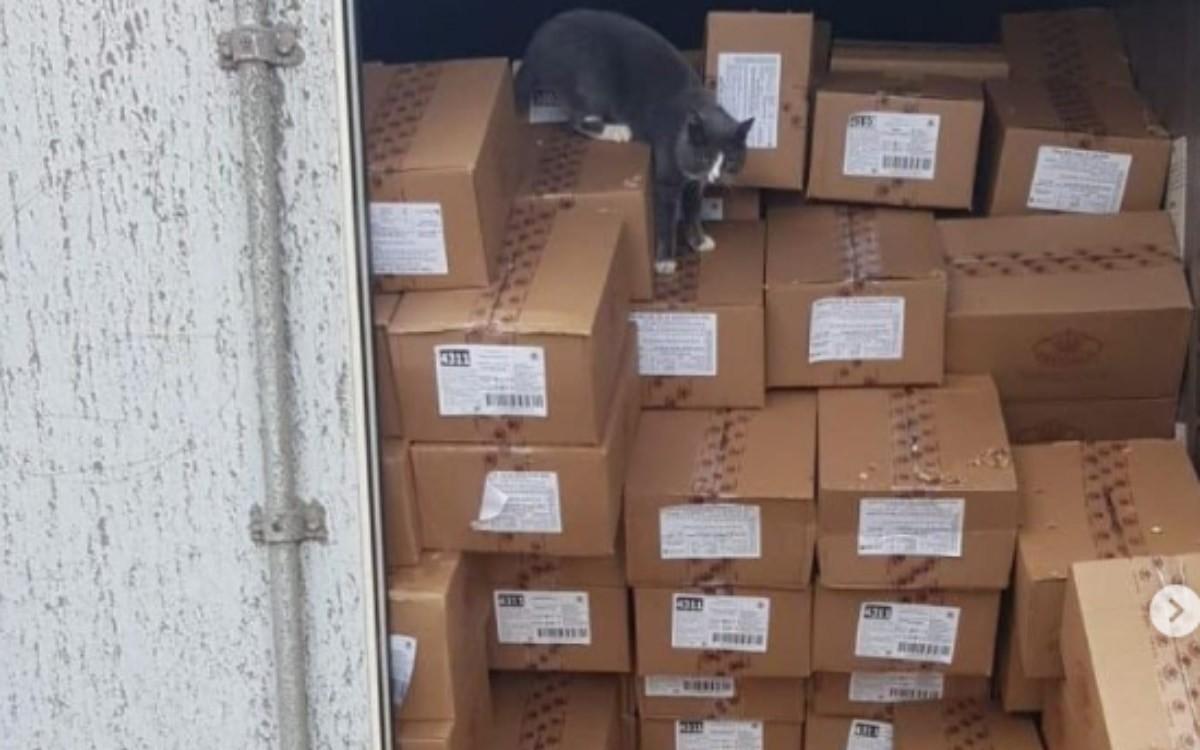 【奇跡の生還】3週間コンテナに閉じ込められた猫が奇跡の生還!一体どうやって?