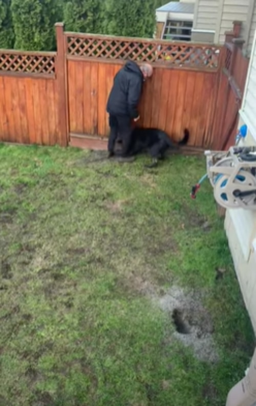 「この穴はダメなの!」庭に開けた穴を飼い主から死守したい子犬がかわいい!
