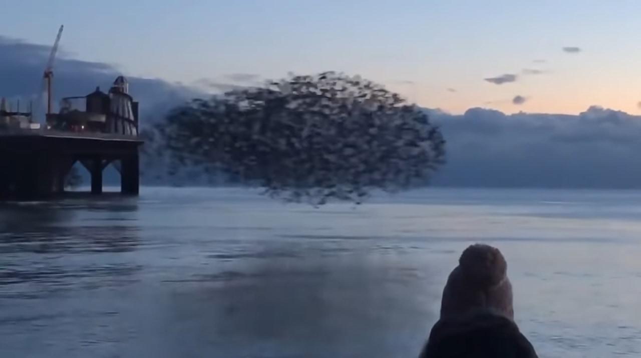 まるで現代アート。水面を飛ぶ鳥の大群が芸術的!