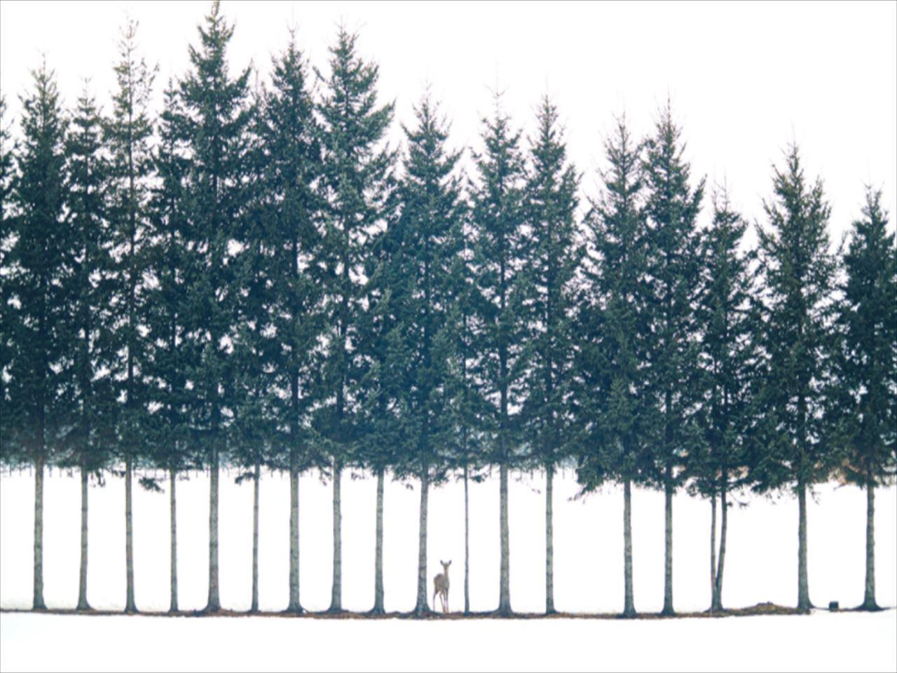 まるでおとぎ話のワンシーン!北海道で撮影した絵に描いたような写真がすごい!