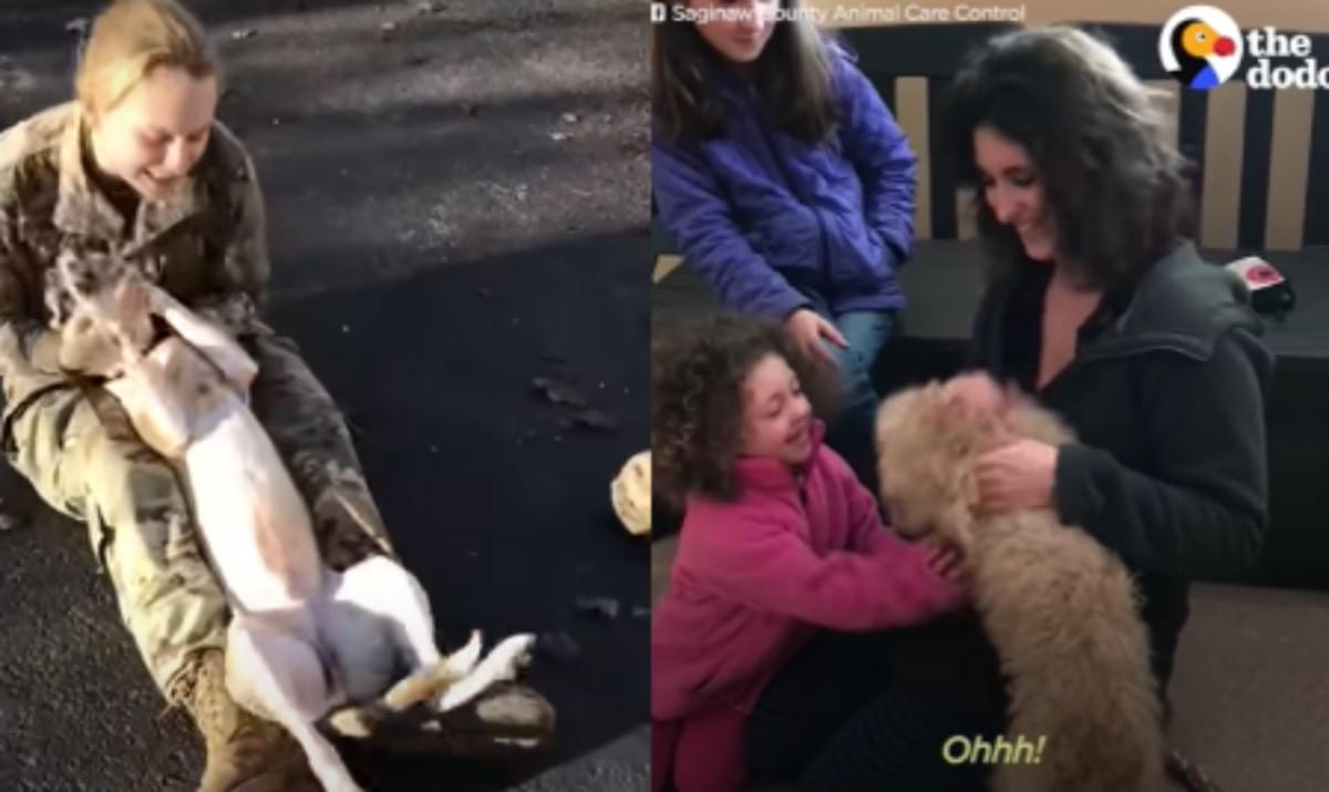 【喜びの連鎖】固く結ばれた人間と犬の絆に涙...感動の再会集をご紹介