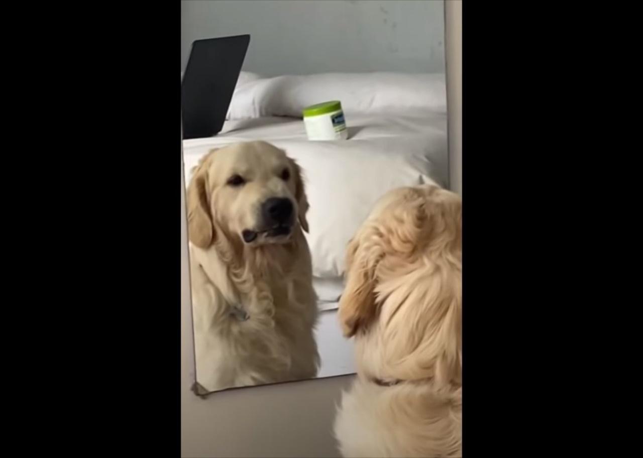 自分の顔を見て何を思う・・・(笑) 鏡の前でいろいろな表情を見せるワンコが面白い!