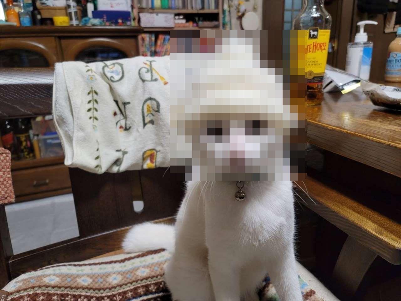 「孫に帽子編んだけど小さすぎた」とコメントを添え、送られてきた写真が面白すぎた(笑)