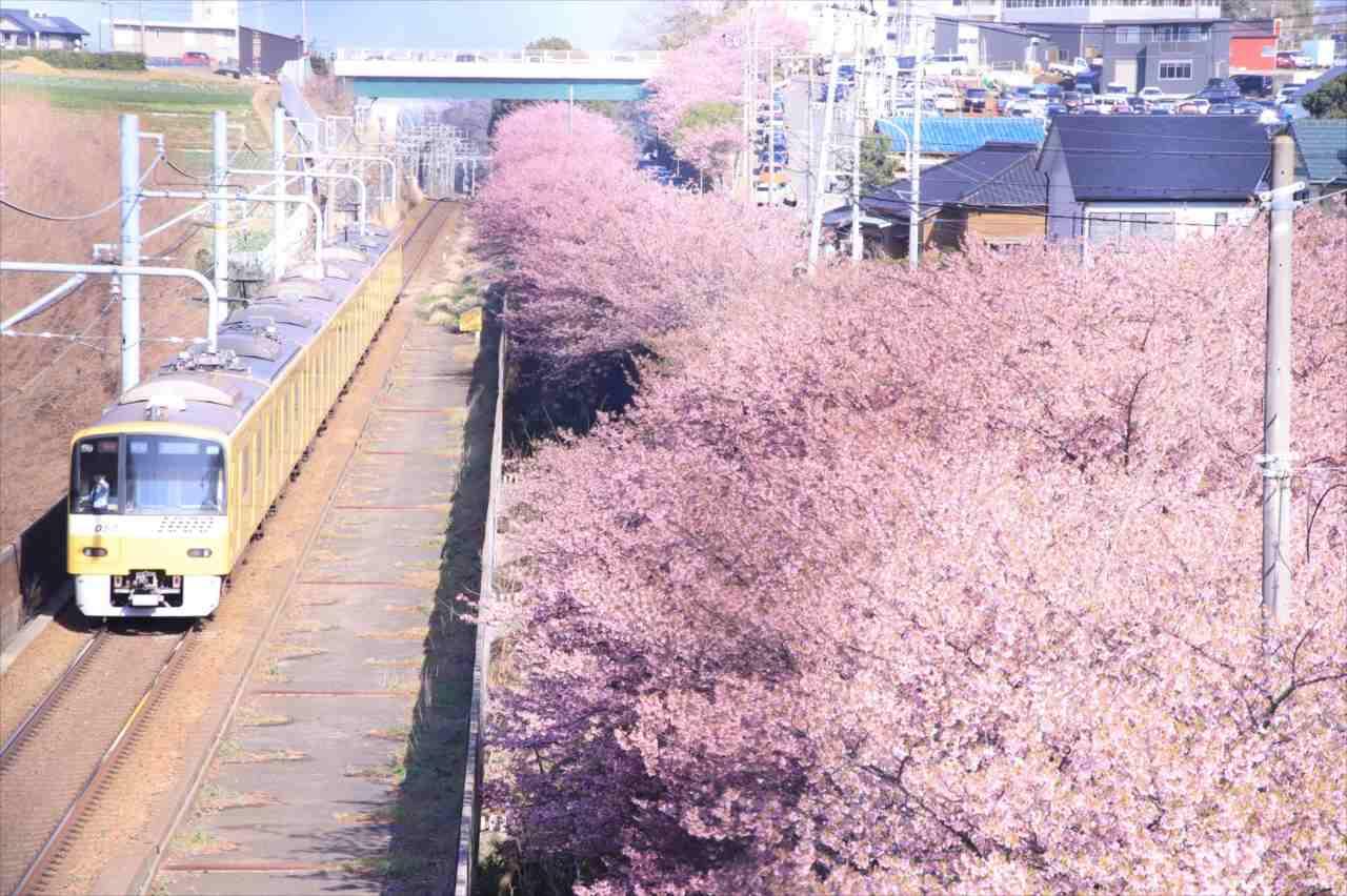 """美しい桜と通りがかった電車という素敵な構図・・・すかさず撮影したら""""驚くべきシーン""""が写っていた!"""
