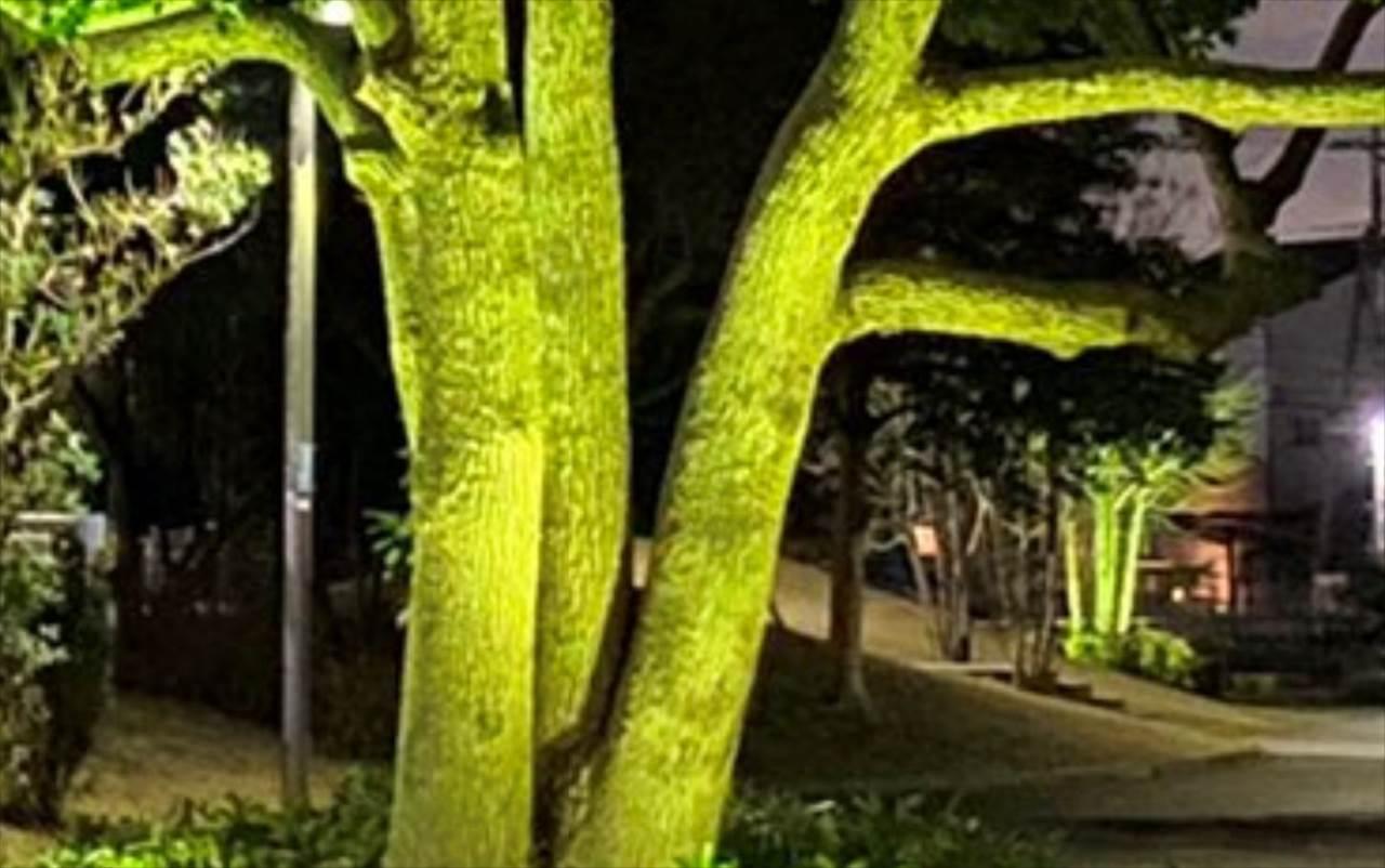 「今まで見た野菜の中で一番でかい(笑)」まるで巨大なブロッコリーのような木が発見される!