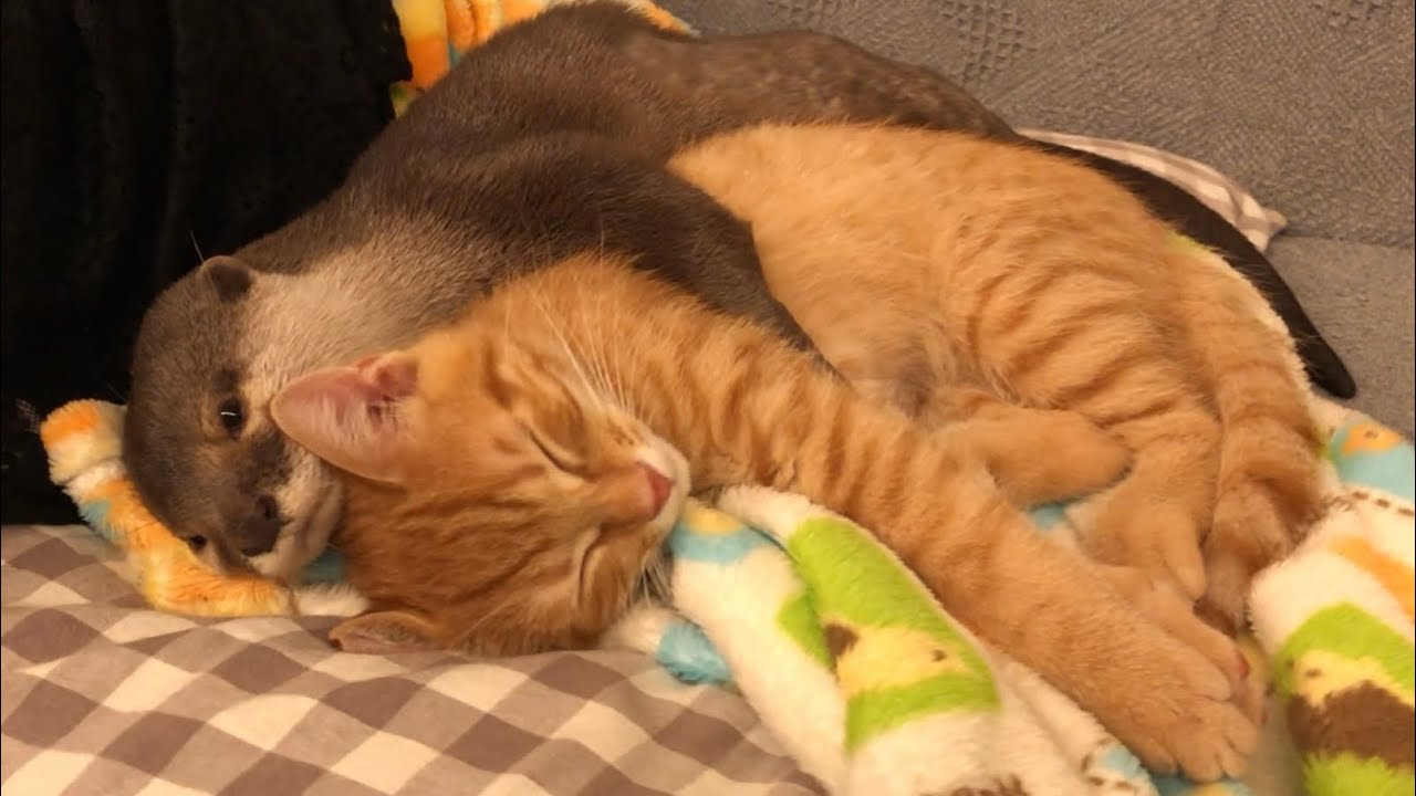 カワウソが可愛すぎてツライ・・・カワウソと猫のファミリーに癒される。