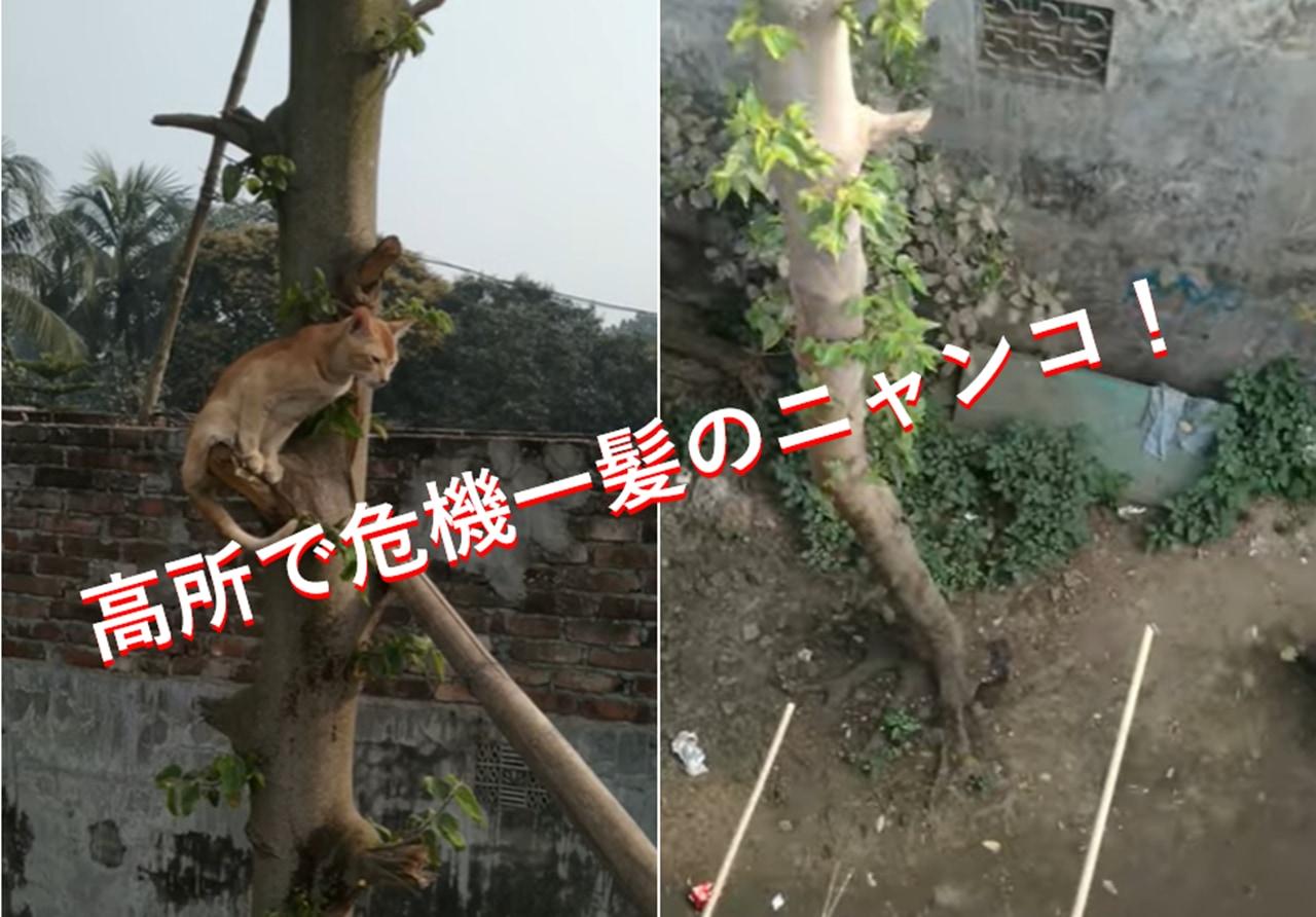 木登りに夢中になっていたらいつの間にか...超高所で動けなくなった子猫の救出劇!