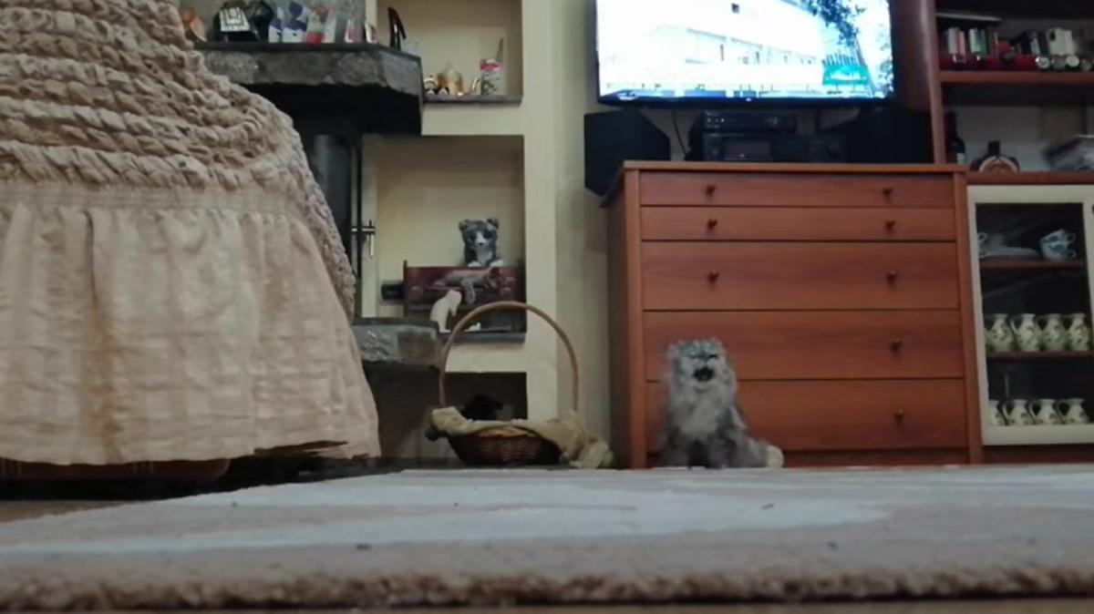 監視カメラがとらえた!猫が言葉を練習してる?隠れて密にしゃべってる猫の動画が話題に!