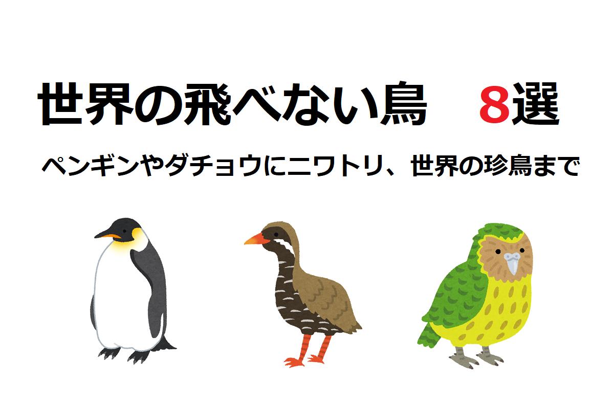 世界に!そして日本にも!実は種類が豊富な「飛べない鳥」8選