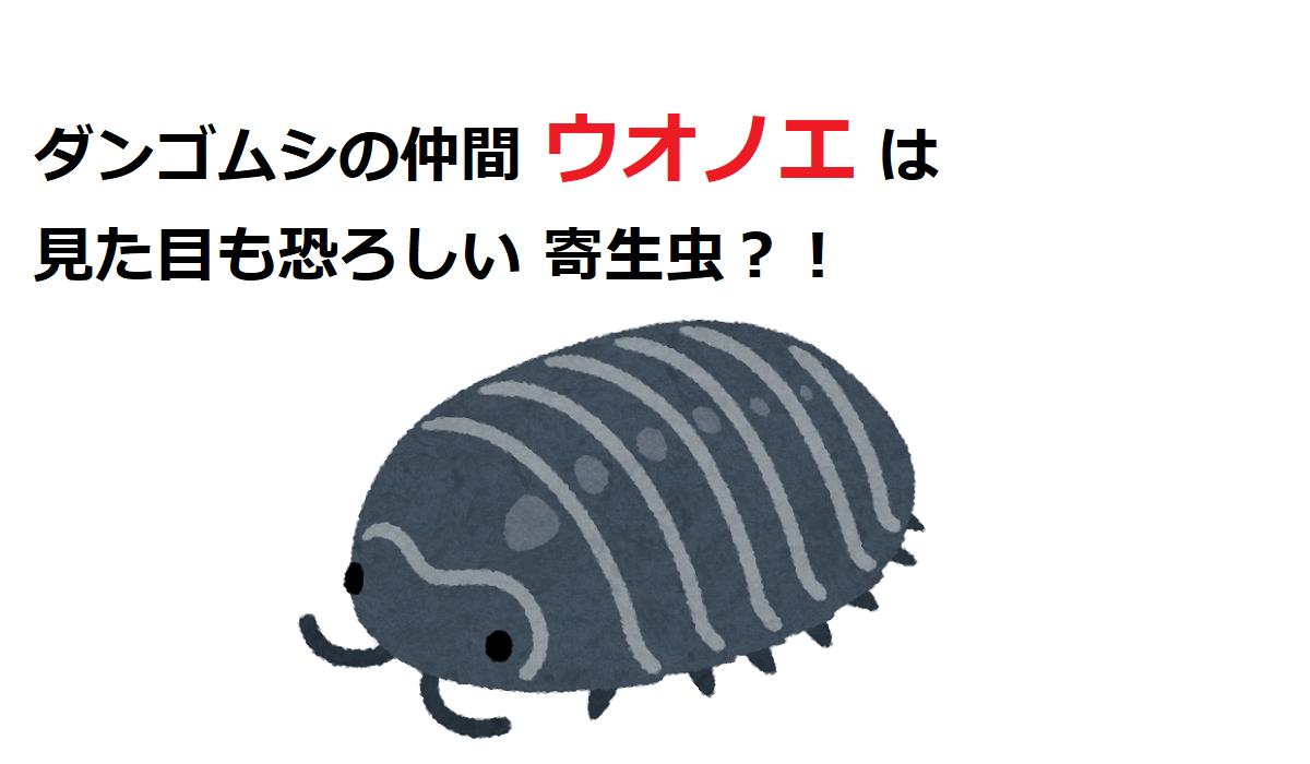 【ウオノエ】ダンゴムシの仲間は恐ろしい寄生虫?!