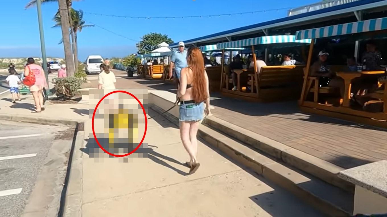 愛犬とお散歩をしていただけで警察沙汰に!?衝撃の真相が凄い