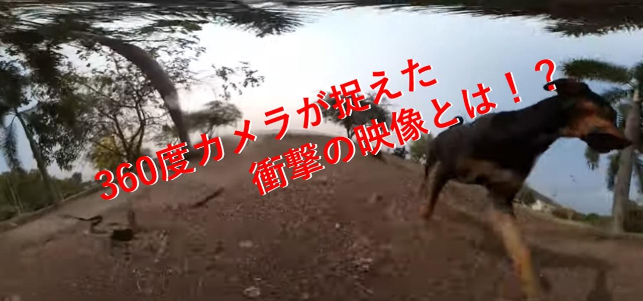 バイクで走るクールな映像を撮ろうと思ったのに...1匹のワンコによってまさかの展開に!