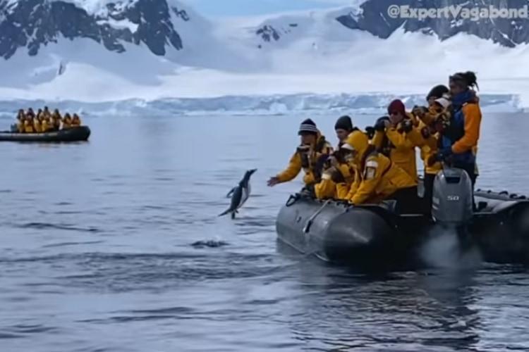 「助けてください!!」シャチに追われたペンギンが人間のボートに飛び乗って危機回避!