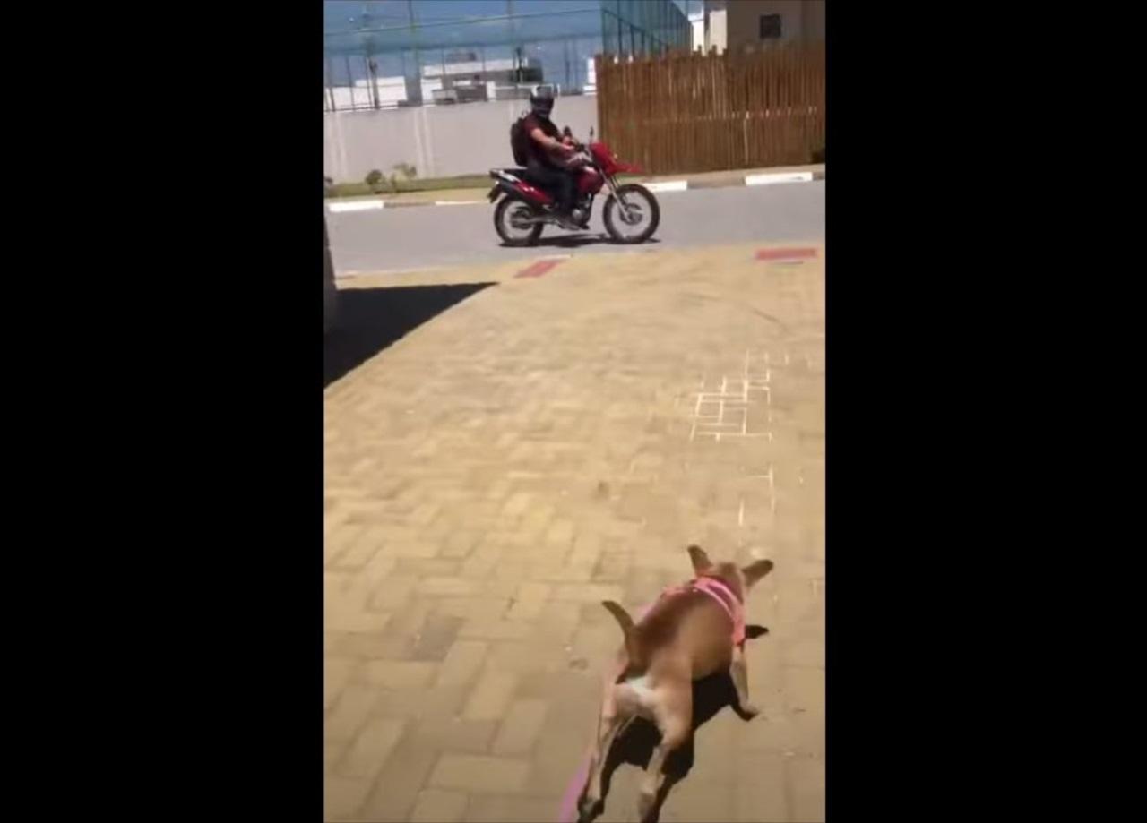 飼い主さんを見つけると大はしゃぎ!(笑) バイクで出かけたくて仕方がないワンコが可愛すぎる!