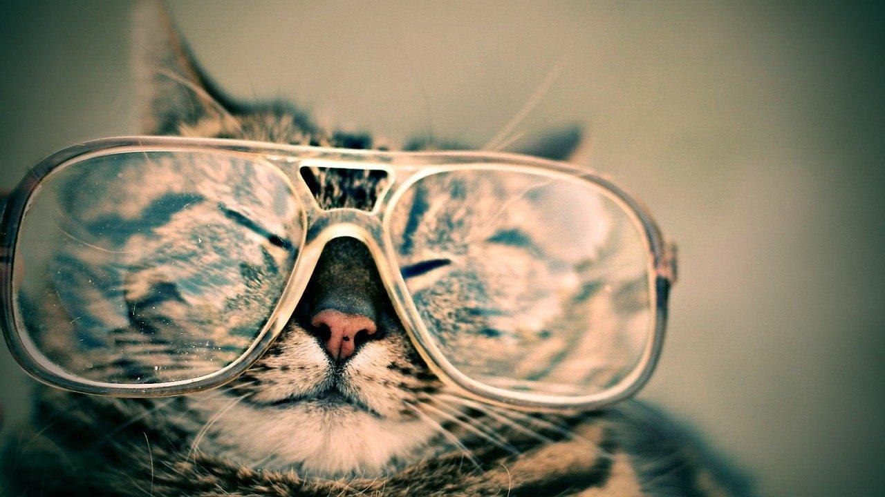 誰もがを意味する「猫も杓子も」その由来は何?そもそも杓子って何?