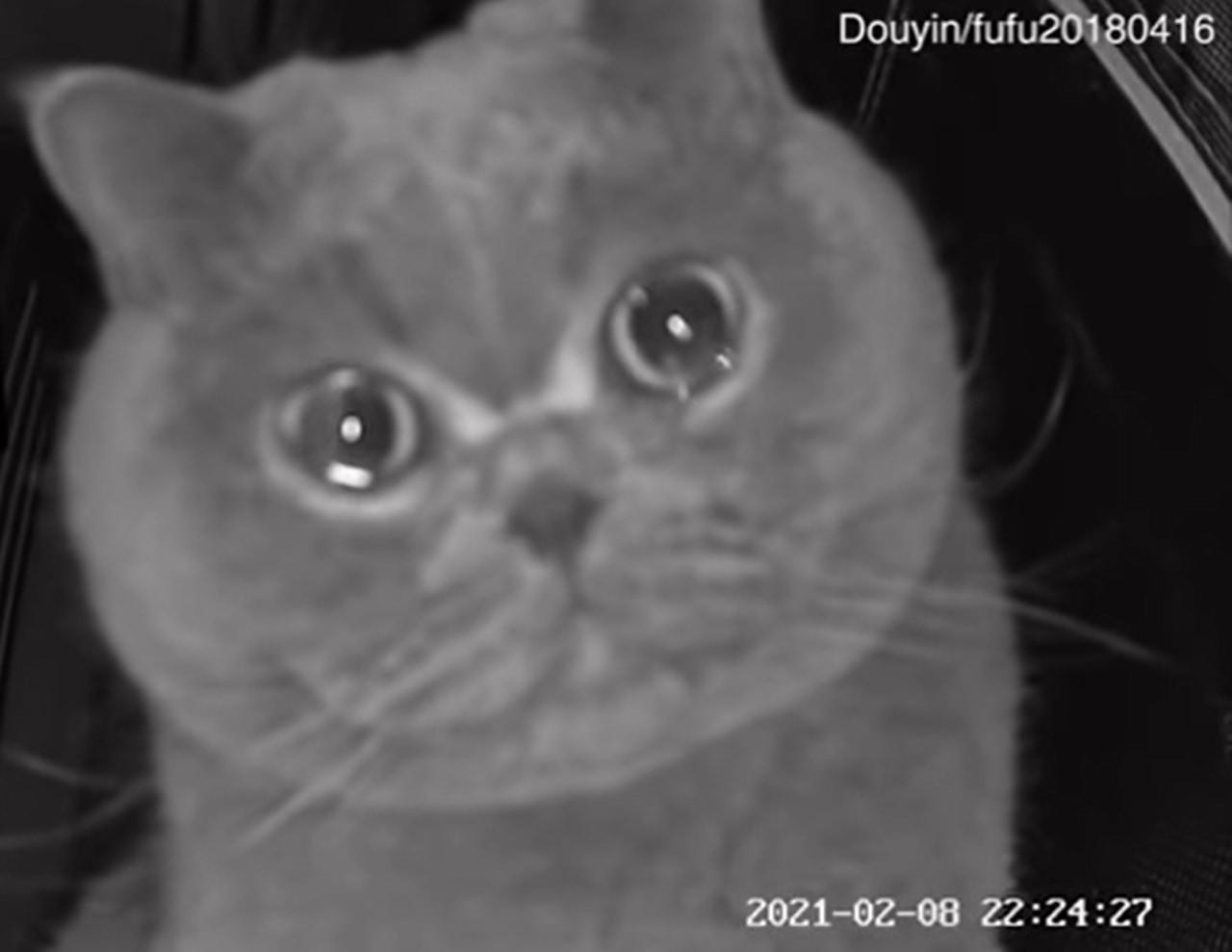 「早く帰ってきて」とペットカメラに訴えるニャンコに飼い主は帰宅不可避!