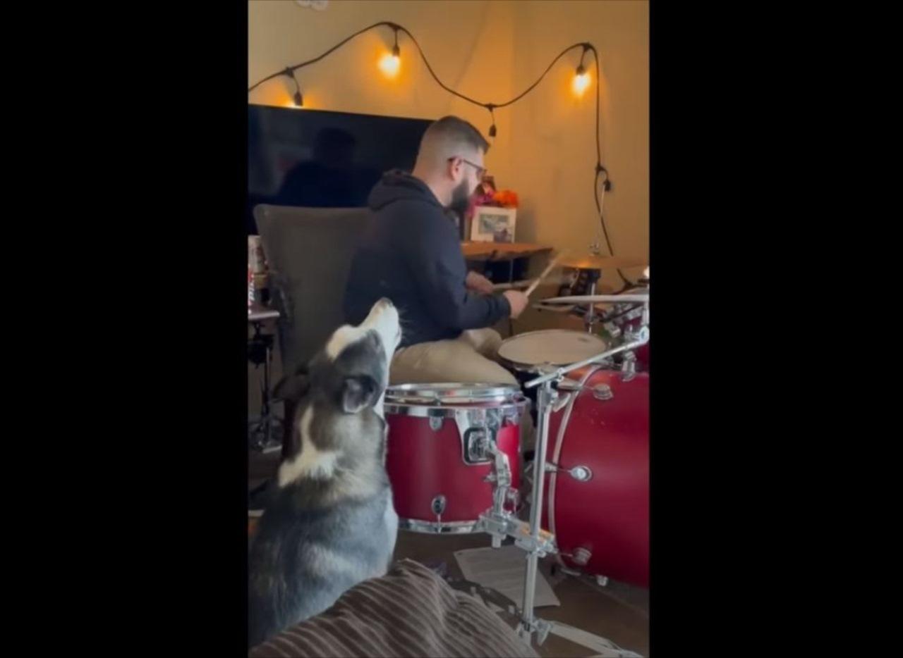 妙にハマってる(笑) 飼い主さんのドラムに合わせて熱唱するワンコが話題に!