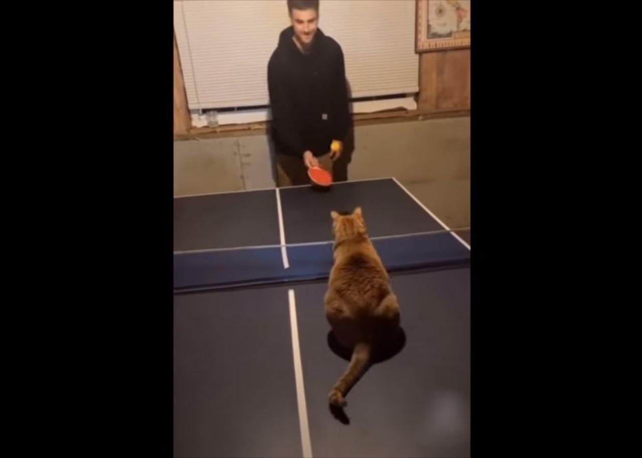 卓球なら負けないニャン!卓球が上手すぎるニャンコが話題に!スマッシュも凄い(笑)