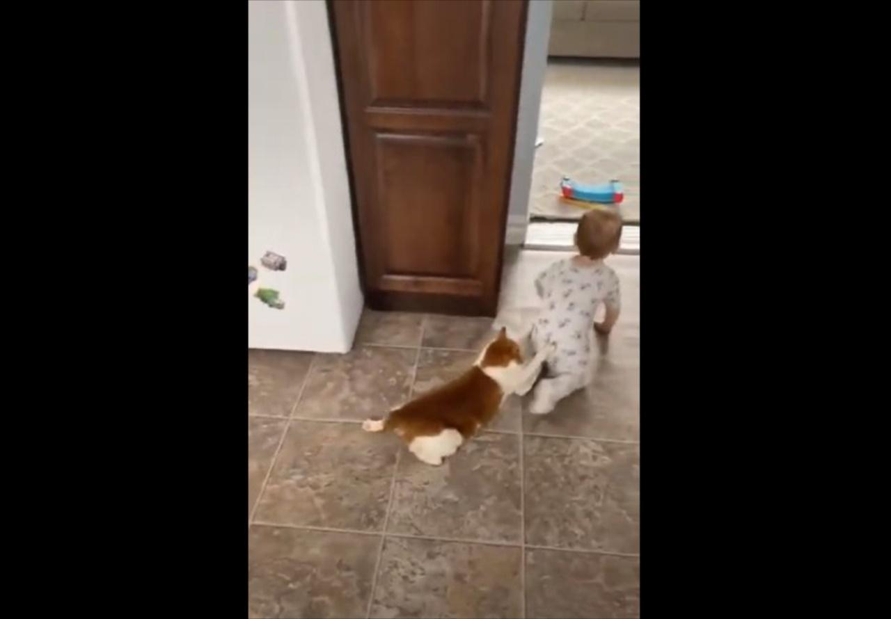 【可愛さのコラボ】赤ちゃんにしがみついて引きずられるニャンコが可愛らしい!
