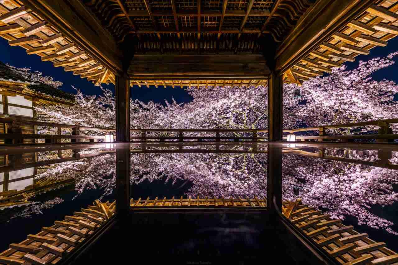 まるで夢の中にいるような美しさ・・・天台寺門宗の総本山・三井寺の観月舞台が凄いことに!