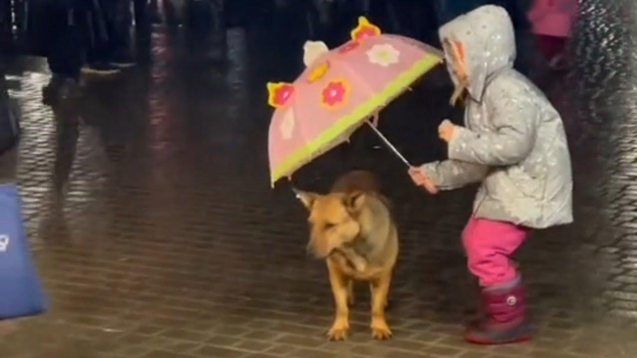 あなたならどうする?雨に濡れる野良犬を見た少女が取った行動とは