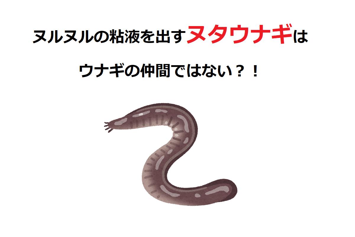 【ヌタウナギ】そのネバネバ粘液は何のためにあるの?