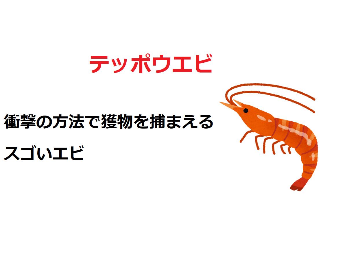 大きなハサミを持つ「テッポウエビ」、その狩猟方法は衝撃の方法だった?!