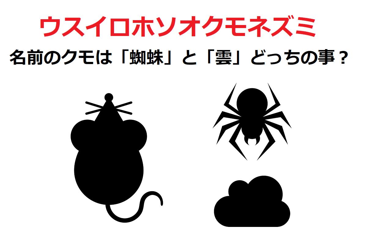 「ウスイロホソオクモネズミ」は、蜘蛛ではなく雲から名前が来たネズミ