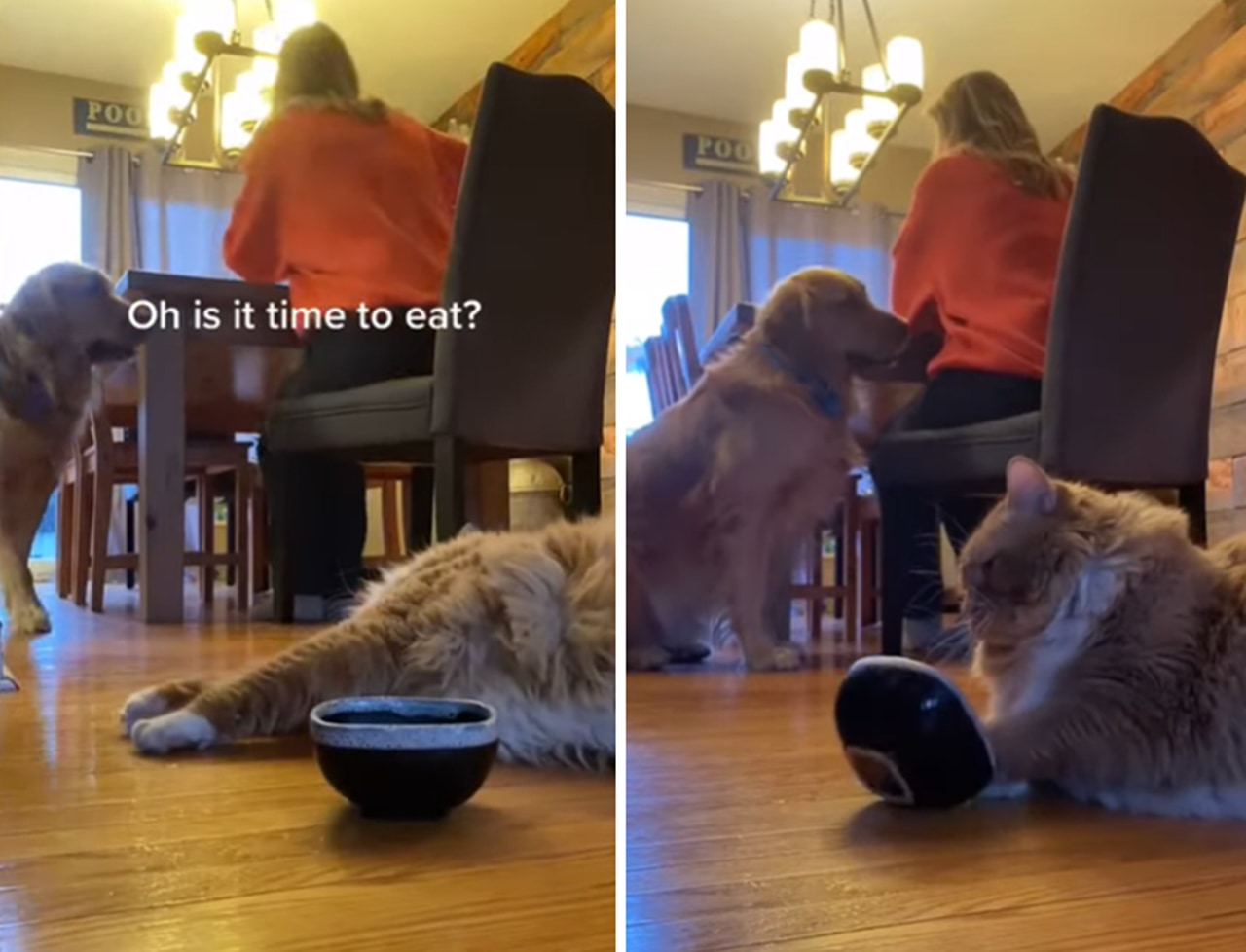 まるでおっさん!?横着にご飯を要求するニャンコに飼い主さんは大迷惑