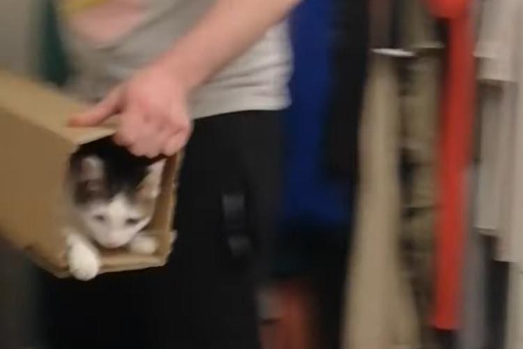 """「もう一回発射ニャ!」猫が自分で乗り込む""""エンドレス猫ランチャー""""があったぞ!"""