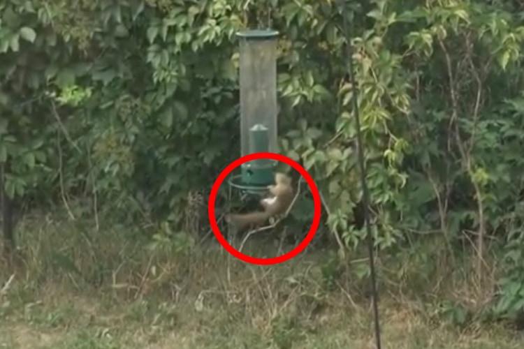 鳥の餌箱に掴まって回転し続けるリス!?実は餌箱の仕組みを逆手に取った賢い行動だった!