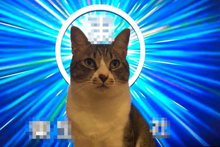 なんて神々しいお姿なんだ!後光が差すネコ様の尊いショットがTwitterで話題に