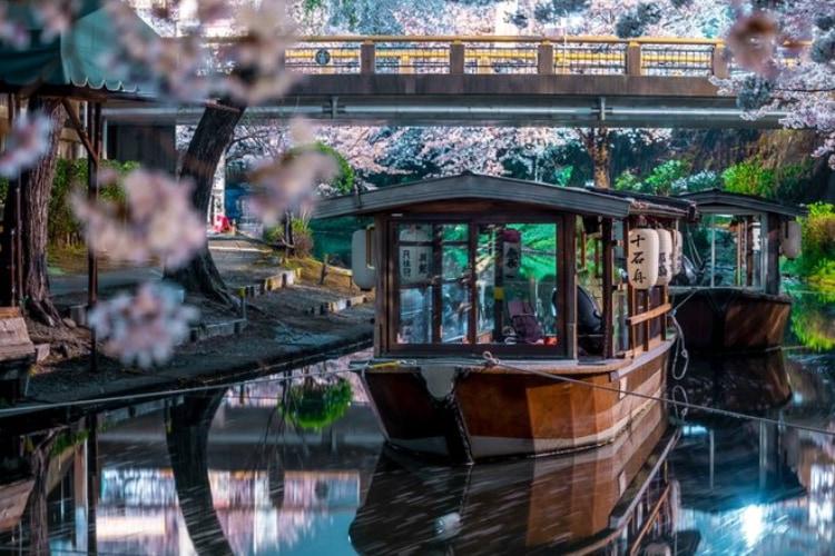 静寂の夜を彩る水鏡と桜!京都・伏見十石舟の夜景写真が美しすぎて言葉を失う