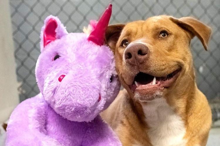 """ユニコーンのぬいぐるみを執拗に盗みに入った野良犬、""""お友達""""と一緒に保護される"""