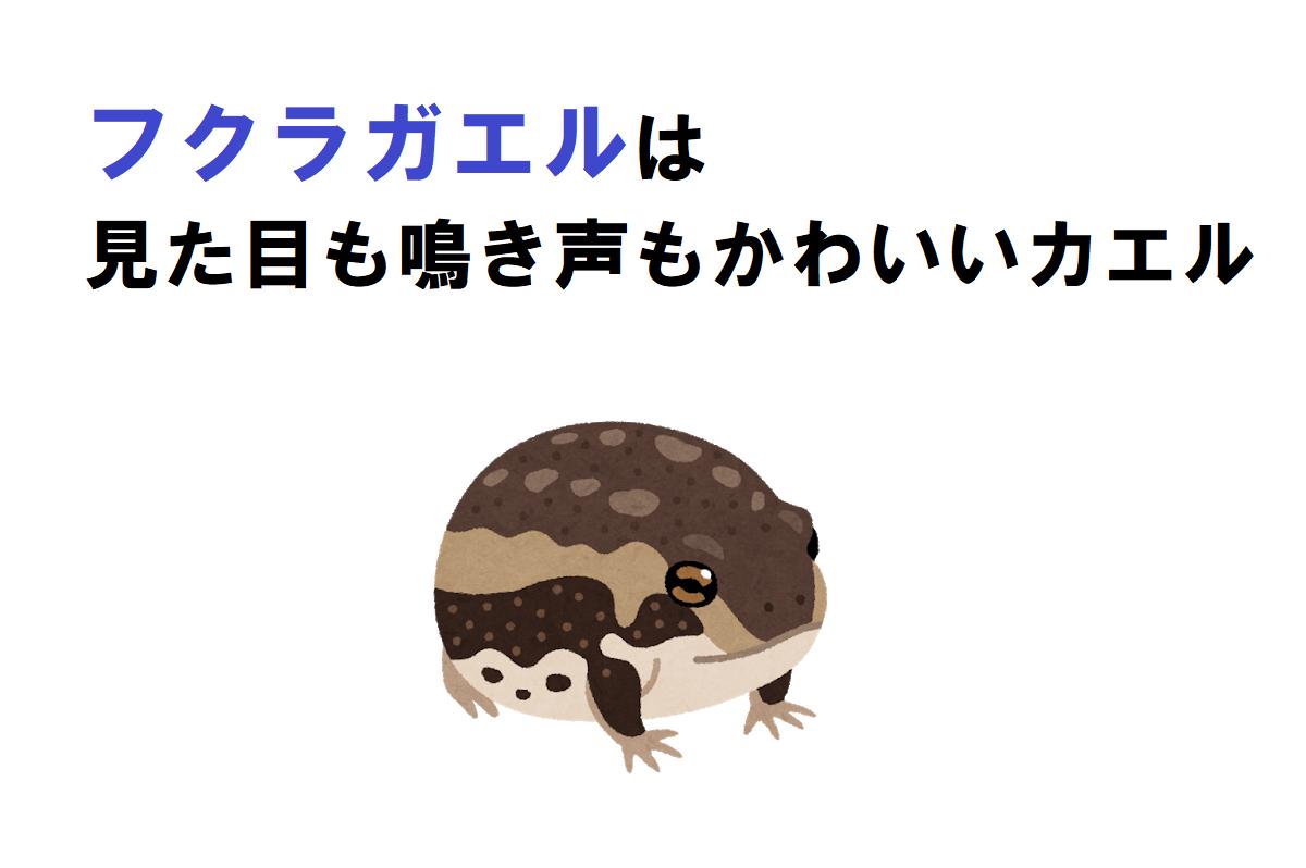 丸っこくてかわいい「フクラガエル」は、鳴き声もとてもかわいい!